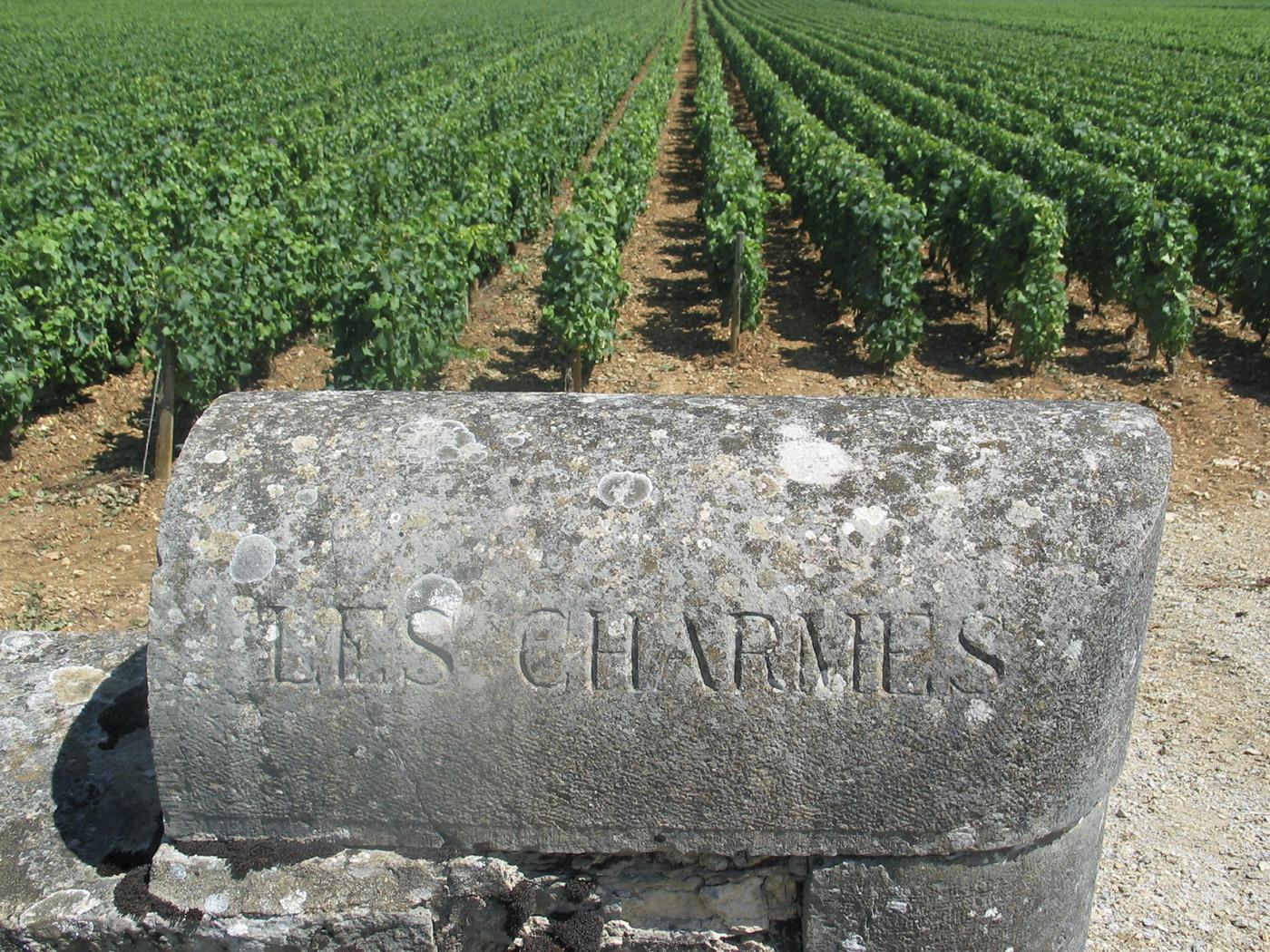 Notre sélection de vins - Cave Chalon-sur-Saône
